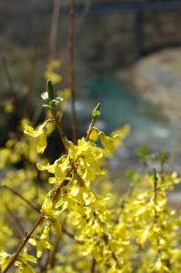 四万温泉は花の季節
