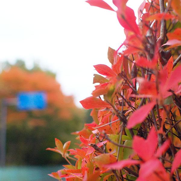 四万温泉の紅葉が始まりました