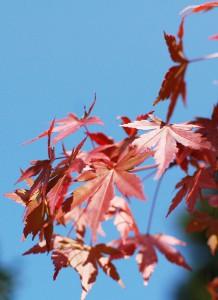 四万温泉の紅葉