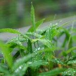 四万の雨2