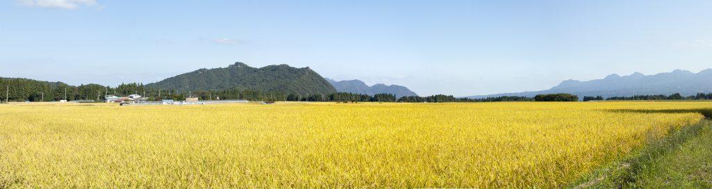 収穫の美野原