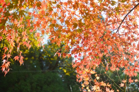 紅葉の貸切露天風呂