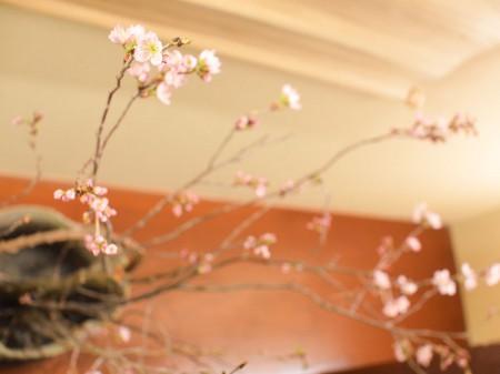 早めの桜を飾りました