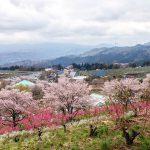 4月5月は花祭り? 花と緑のぐんまづくり2015in中之条