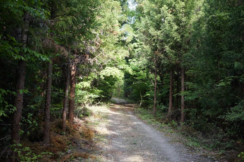 小倉の滝への林道