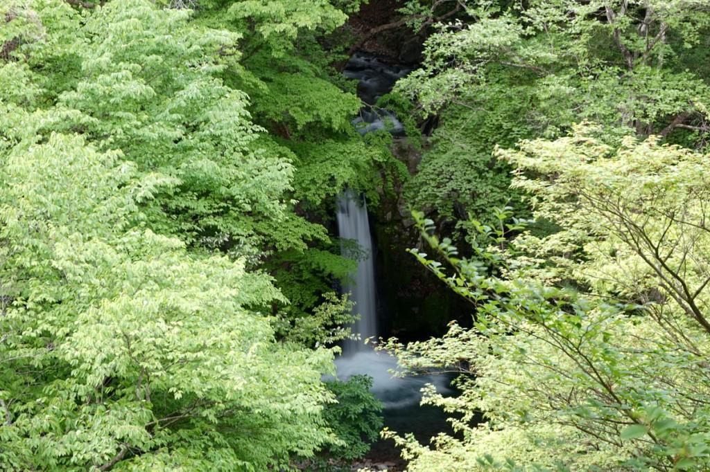 新緑の小泉の滝