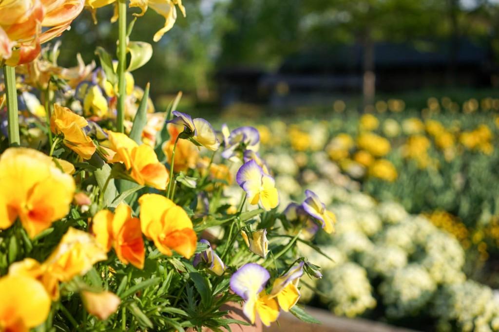 花と緑のぐんまづくり2015in中之条
