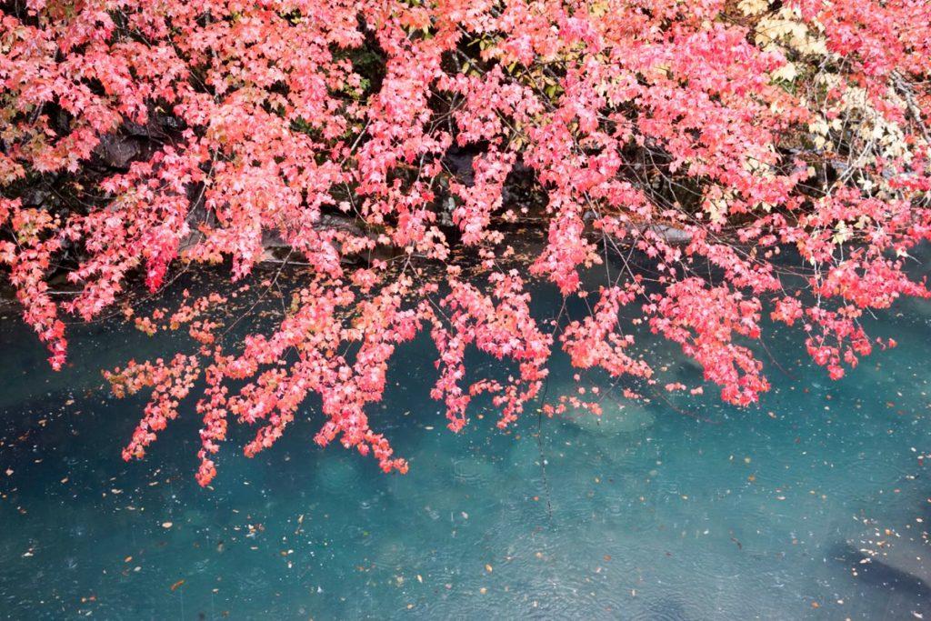 四万ブルーと紅葉