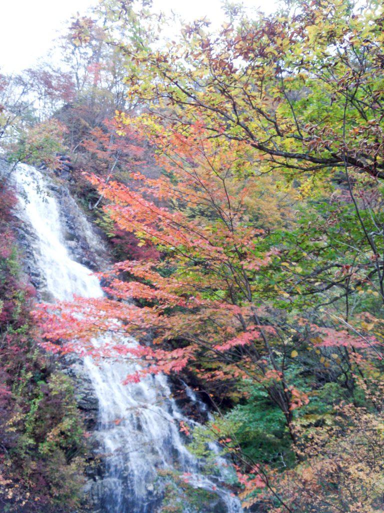 シャクナゲの滝