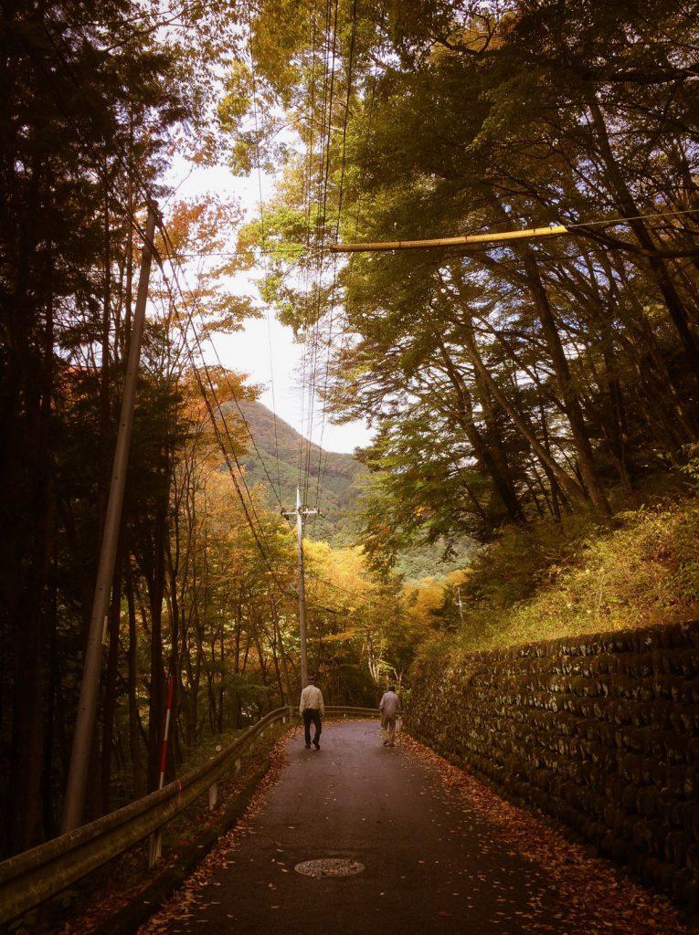 紅葉の朝散歩