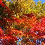 私のNo1紅葉写真 (yuuki編)