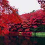 私のNo.1紅葉写真(AOI編)