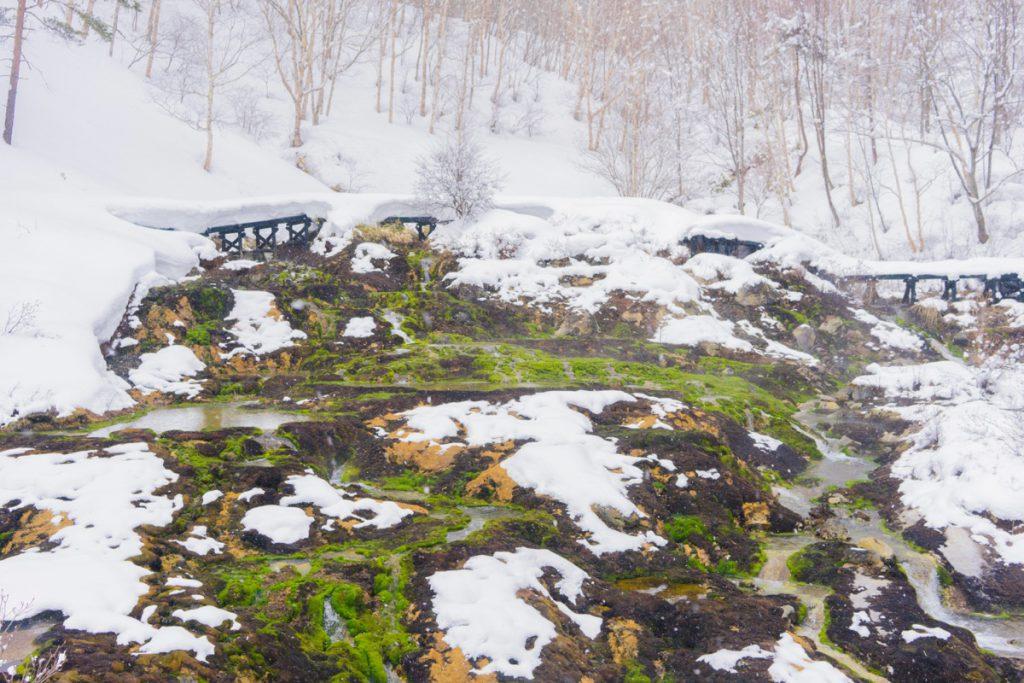 冬のチャツボミゴケ公園