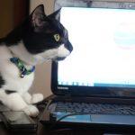 ネコのチャーヤさん