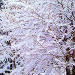 雪景色がきれいな時期になりました