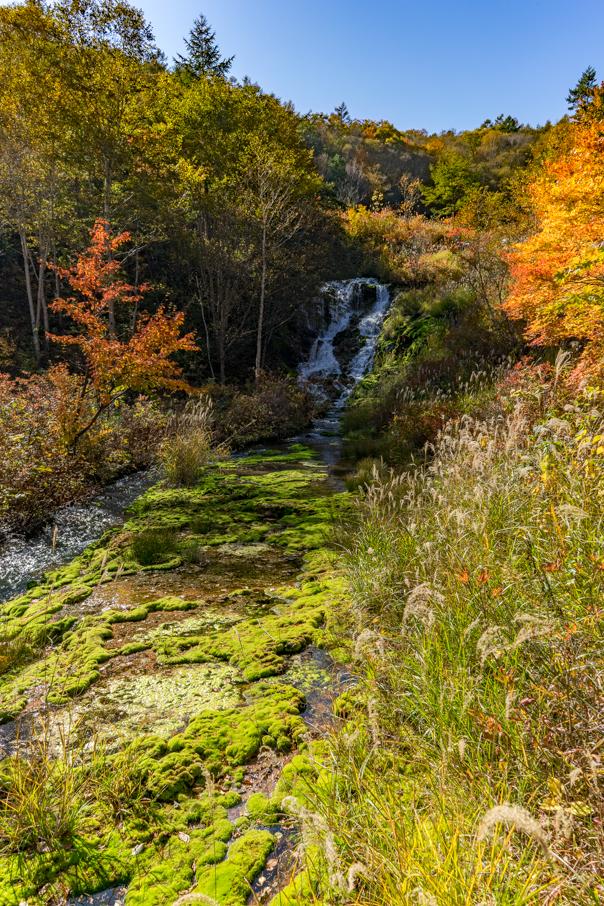チャツボミゴケ公園の紅葉