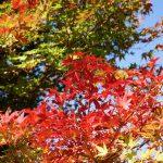 四万温泉の紅葉の前に、早めに見られる群馬県の紅葉は?