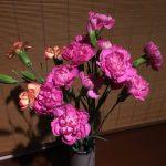 柏屋旅館のお花