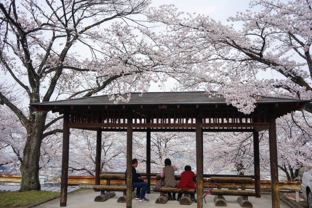 群馬県のお花見、桜