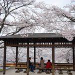 四万温泉の桜はまだですが、4月前半は群馬の桜で花見を楽しみませんか?