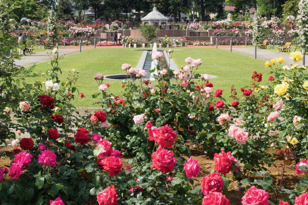 敷島公園バラ園