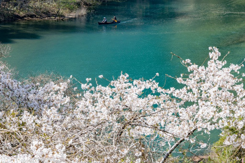 四万湖の桜とカヌー