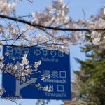四万温泉もいよいよ春本番!桜ももう少しで満開です(2019)