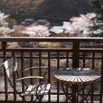 桜満開、四万温泉。うららかな春の日を楽しみませんか(2019)