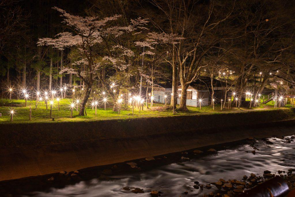 四万灯りと満開の桜(新湯)