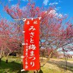 梅と河津桜