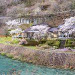 四万温泉の桜 2020 お花見日和の一週間