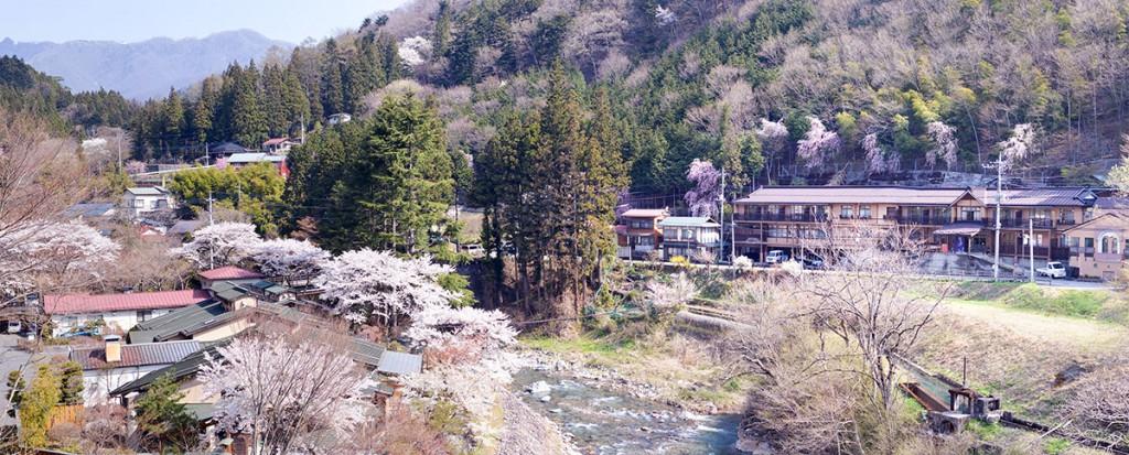 Sakura in Shima Onsen