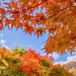 10 Best Places for Autumn Leaves in Kanto 2018