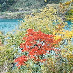 四万温泉奥四万湖の紅葉