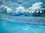 清流の湯と桜